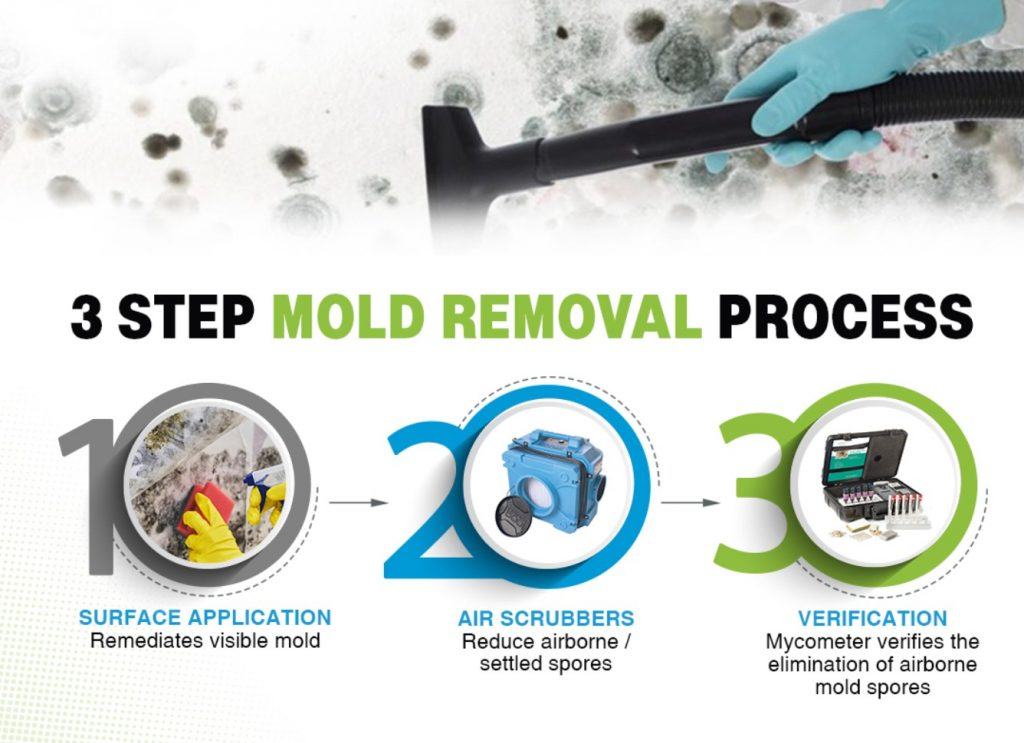 Steps for mold removal